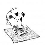 Тест на IQ для собак. Еда под полотенцем