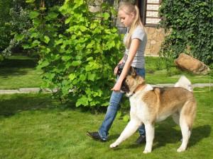 Кликер-тренинг Журнал Мир собак