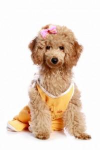 Стерилизация сук Журнал мир собак