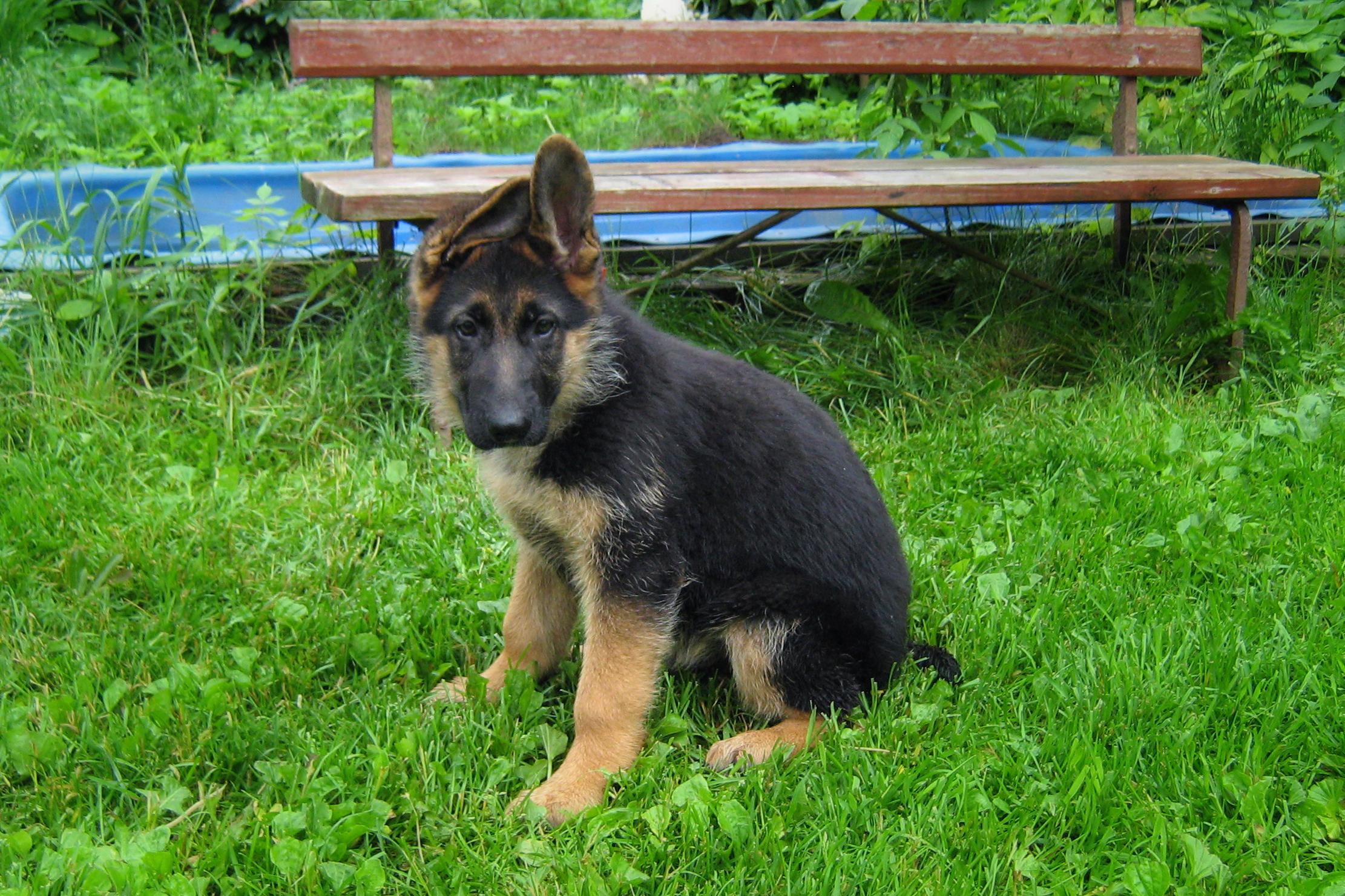 Дисплазия тазобедренных суставов у собак популярно о важном