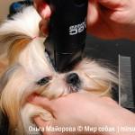 Груминг ши-тцу. Журнал Мир собак