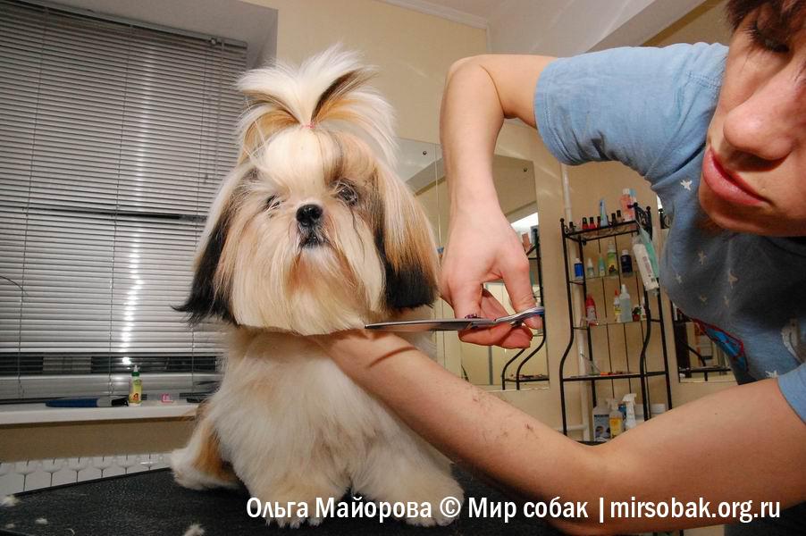 Стрижка собак на животе