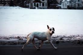Детройт. Бездомные собаки