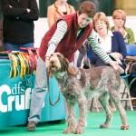 Crufts 2011 Журнал Мир собак Спиноне Итальяно