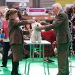 Crufts 2011 Журнал Мир собак Вест хайленд вайт терьер