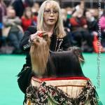 Crufts 2011 Журнал Мир собак Йоркширский терьер, йорк