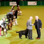 Crufts 2011 Журнал Мир собак Бест ин шоу Best in Show