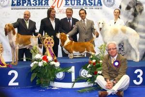 Победители выставки Евразия 2011, 1 день: COOLPEPPER ORIGINAL BIG BONE, NAPOLEONE DEL TAVULUDDARO, SOLOVYEV GVARDIA BELAYA