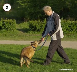 Кликер-тренинг. Команда ко мне. Журнал Мир собак