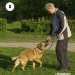 Уроки кликер-тренинга. Команда ко мне. Журнал Мир собак