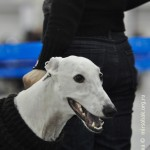Журнал Мир собак.Евразия 2011. Грейхаунд