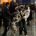 Журнал Мир собак.Евразия 2011. Дог