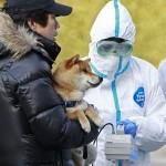 Землетрясение в Японии. Собака