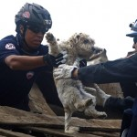 Спасение собаки, пострадавшей от землетрясения в Японии