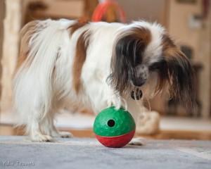 Интеллектуальные интерактивные игры для собак