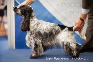 Фото собаки в стойке у стенда выставка