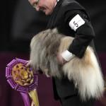 Пекинес Малахия Malachy победитель BIS Вестминстер Дог Шоу 2012