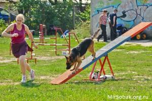 Аджилити немецкая овчарка журнал о собаках Мир собак