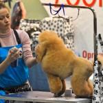 ZooRussia 2012 Зоороссия конкурс грумеров Мишкакова Любовь пудель