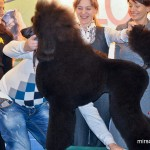 ZooRussia 2012 Зоороссия конкурс грумеров ZooGroom Бадрышевва Анна пудель Берендей