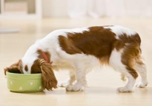 Собака ест. Сухой корм или натуралка журнал Мир собак