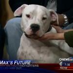 Max Максимус собака укусила телеведущую ведущую
