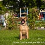 Слишком широкий кадр как снимать собак