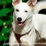 Слишком плотное кадрирование как снимать собак