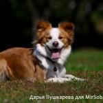 Правильное кадрирование портрет собаки как снимать собак