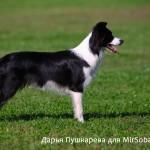 Правильная точка съемки собаки как фотографировать собак