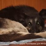 Съемка со встроенной вспышкой неправильный портрет собаки как фотографировать собак