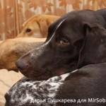 Съемка собаки при естественном освещении Как фотографировать собак