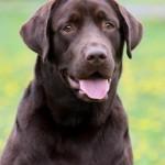 Съемка с облачный день как фотографировать собак портрет собаки
