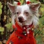 Слишком пестрый фон портрет собаки как фотографировать собак