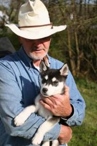 Аляскинский кли кай мини хаски журнал Мир собак