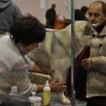 Выставка собак в Нижнем Миллион друзей 2011
