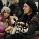 Выставка собак в Нижнем Миллион друзей 2011 хаски