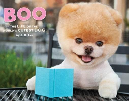 Boo dog собака Boo