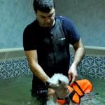 Бассейн для собак ZOOСпорт журнал о собаках Мир собак