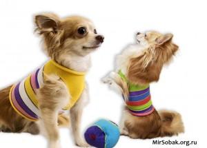 Майки для собак из носка своими руками