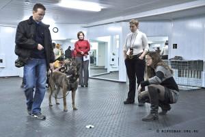 Мастер-классы по тренировке собак Анне Лил Квам Норвегия