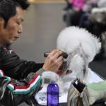 Мастер-класс Тошинори Омура по грумингу пуделя