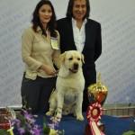 Евразия 2012 Бест лабрадор и Иншаков
