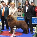 Евразия 2012 Бест лучший юниор ньюф