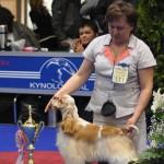 Евразия 2012 Бест лучший юниор кокер спаниель