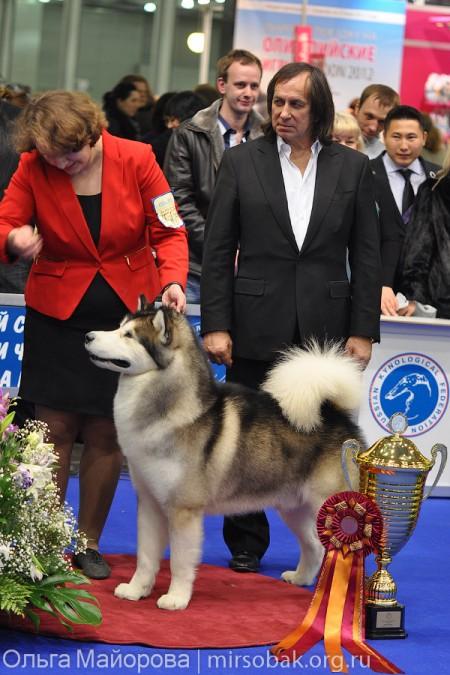 маламут Skywalker Sausimayok победитель Евразия-1 2012