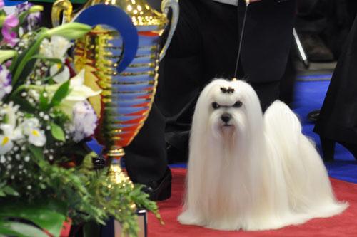 Евразия 2012 best in show Лучшие собаки выставки видео