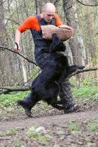 Грюнендаль бельгийская овчарка защита