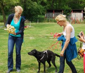 Практический семинар по развивающим играм для собак