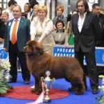 Евразия 2012 фото с best in show бесты